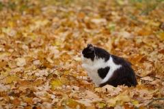 Herzig im Herbst