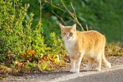 Eine wunderschöne Katze