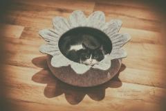 blumige Katze