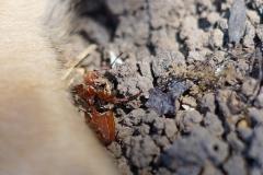 armes Käferchen ist tot